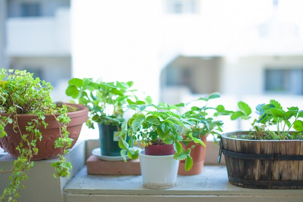 6.インテリアグリーンのおしゃれな取り入れ方。自分らしく植物を楽しむ_1
