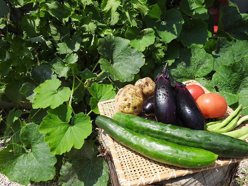 自分たちで食べる野菜を作る楽しみを